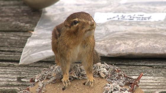 Small Mammals Thumbnail