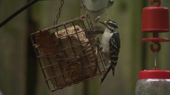 Indiana Dunes Birding Festival Photo