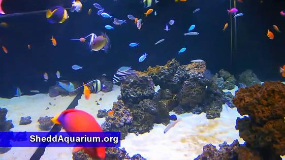 The Shedd Aquarium Thumbnail