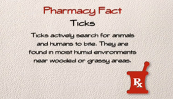 Pharmacy Fact: Ticks Photo