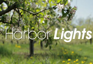 Harbor Lights Series 3 Image