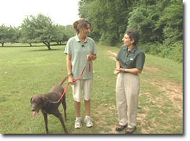 Dog Etiquette in Parks Photo