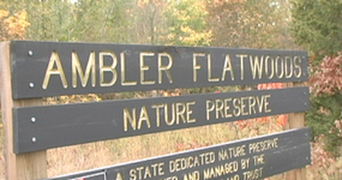 A Visit to Ambler Flatwoods Photo