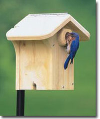 Bluebird Boxes Photo